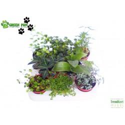 Alacsony kúszó, futó növény mix - Winder Plant Mix (8 O)