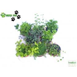 Minilevelű növény mix - Nano Plant Mix (8 O)