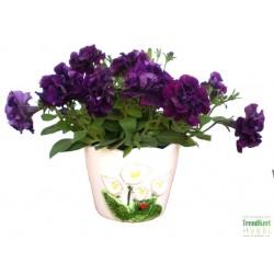 Petúnia bársonylila teltvirágú - Petunia Surfinia Doublet Lilac