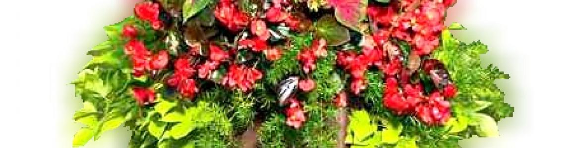 Álló leveles növények