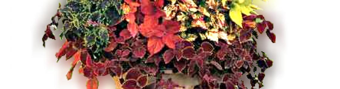Csüngő leveles növények