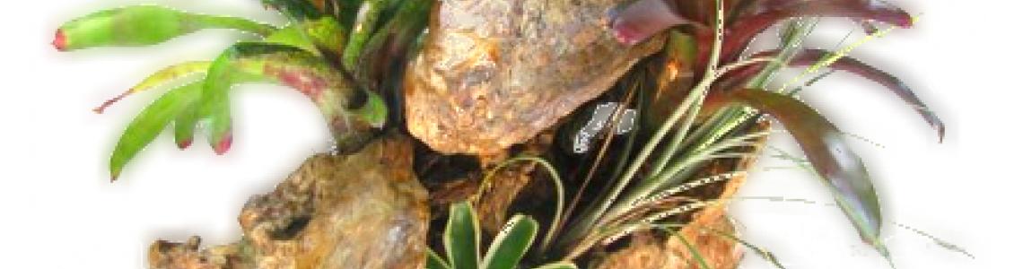 Epifita, Fán lakó növények