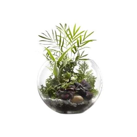 Floráriumi növények