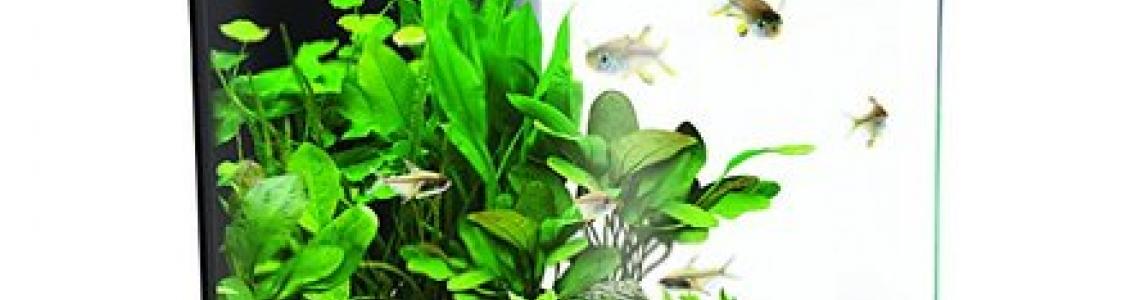 Vízinövények gondozása