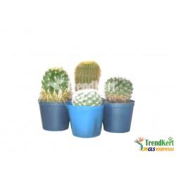 07/2018/30 kaktusz mix