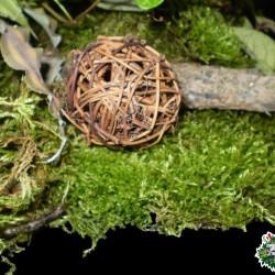 Száraz növényi rész 01 vesszőlabda natúr