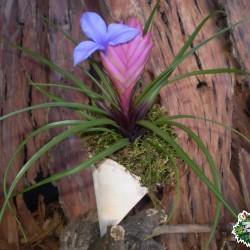Ültethető száraz termés sp. 31